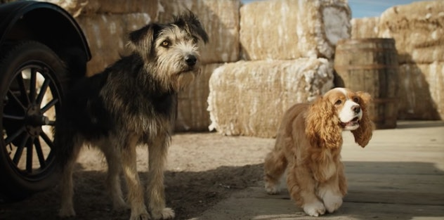 Even dogs can find love in 'Lady & The Tramp!'
