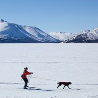 Skijoring: Where human and dog athletes work as one