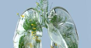 green lungs, clean air, eco-friendly