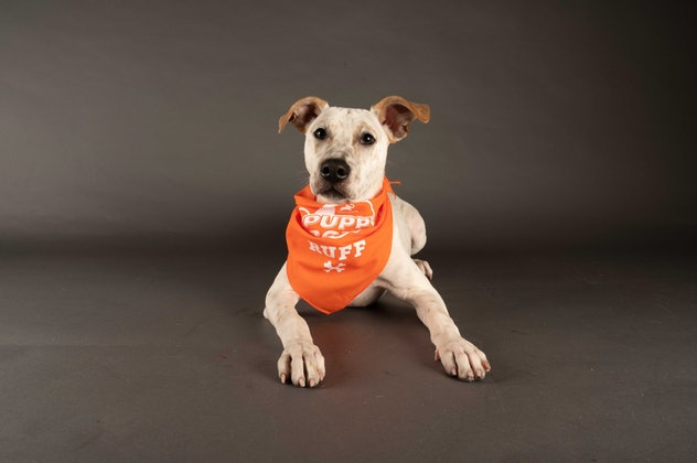 Rumor is playing for Team Ruff during the 2021 Puppy Bowl.