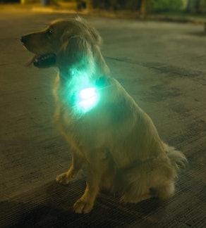 Apace Vision Clip On LED Safety Lights (2-Pack)
