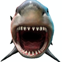 Megalodon: This ancient predator gave birth to babies the size of adult humans