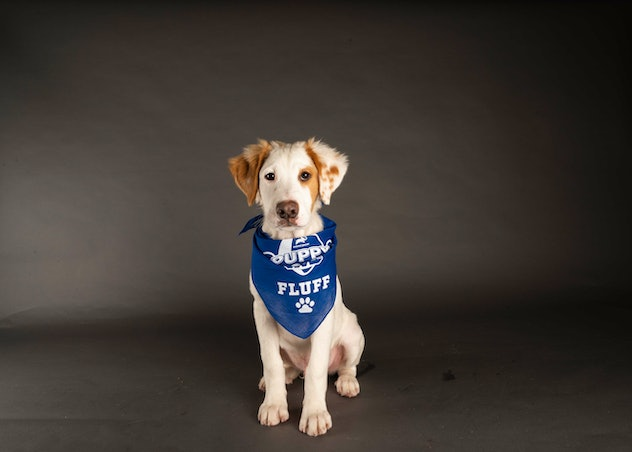 Aaron Pawdgers is playing for Team Fluff during the 2021 Puppy Bowl.