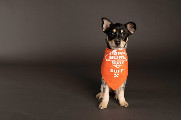 Tina is playing for Team Ruff during the 2021 Puppy Bowl.