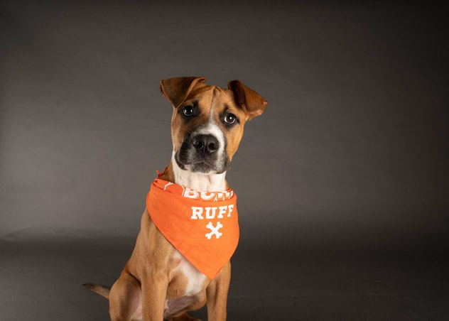 Paulie is playing for Team Ruff during the 2021 Puppy Bowl.