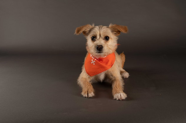 Muffin is playing for Team Ruff during the 2021 Puppy Bowl.