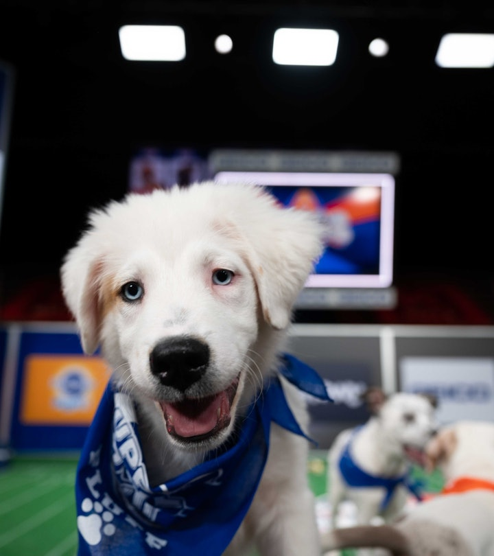The Puppy Bowl will air on Discovery+ on Feb. 7.
