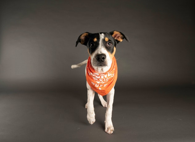 Todd Furly is playing for Team Ruff during the 2021 Puppy Bowl.