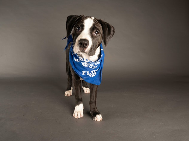 Milky Way is playing for Team Fluff during the 2021 Puppy Bowl.