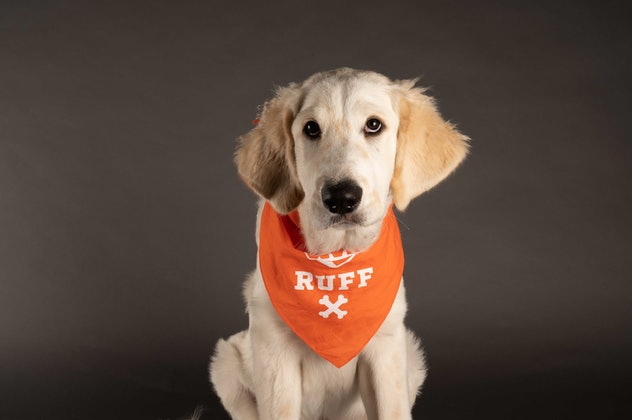 Duke is playing for Team Ruff during the 2021 Puppy Bowl.
