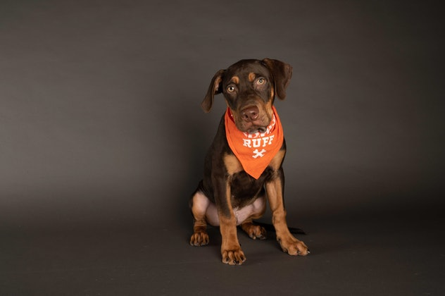 Hunter is playing for Team Ruff during the 2021 Puppy Bowl.
