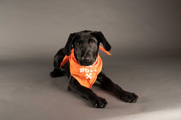 Lee is playing for Team Ruff during the 2021 Puppy Bowl.