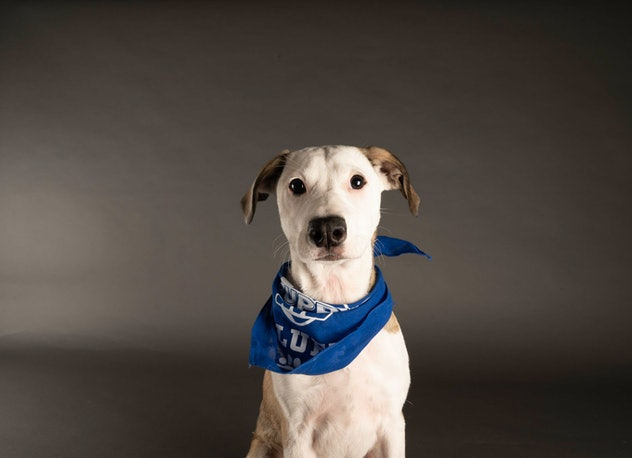 Mary Anne is playing for Team Fluff during the 2021 Puppy Bowl.