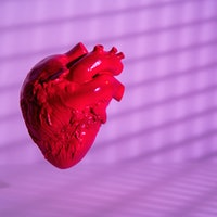 Can we grow a heart? Stunning new scans offer clues