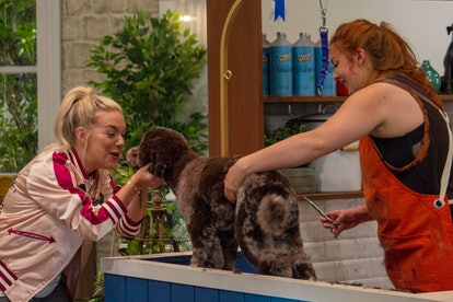 BBC One, 'Pooch Perfect'