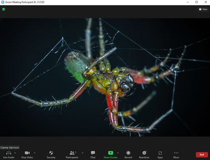 These scary Zoom backgrounds include creepy spiders.