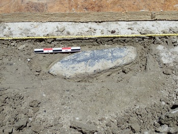Haskett spear uncovered at Wishbone site