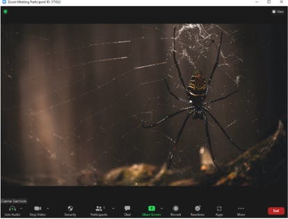 These Halloween Zoom backgrounds include a creepy spider in its web.