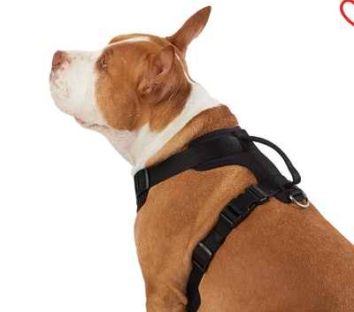 Top Paw® Neoprene Comfort Dog Harness