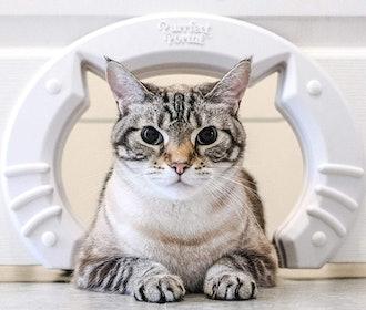 Purrfect Portal Cat Door