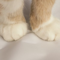 """Why do cats knead? Experts explain the complex science of """"making biscuits"""""""