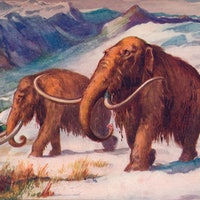 What killed the woolly mammoth? Scientists debunk one extinction theory