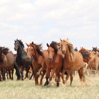 Where did domestic horses come from? Scientists solve a longstanding mystery