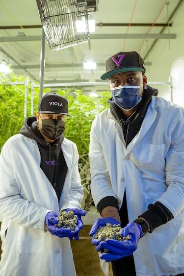 Allen Iverson Viola '97 Cannabis Strain