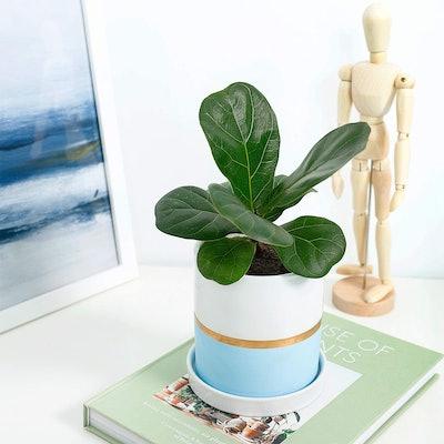 POTEY Cylinder Ceramic Plant Pot