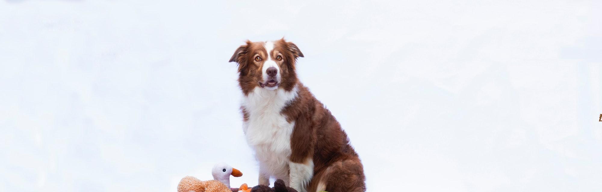 Nalani, a 'genius' dog