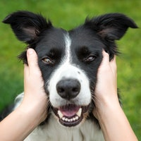 """Can dogs actually learn words? What a new study on """"gifted"""" canines reveals"""
