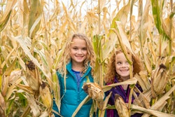 two young girls in a corn maze