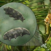 Look: Scientists made a shockingly rare ancient tardigrade discovery