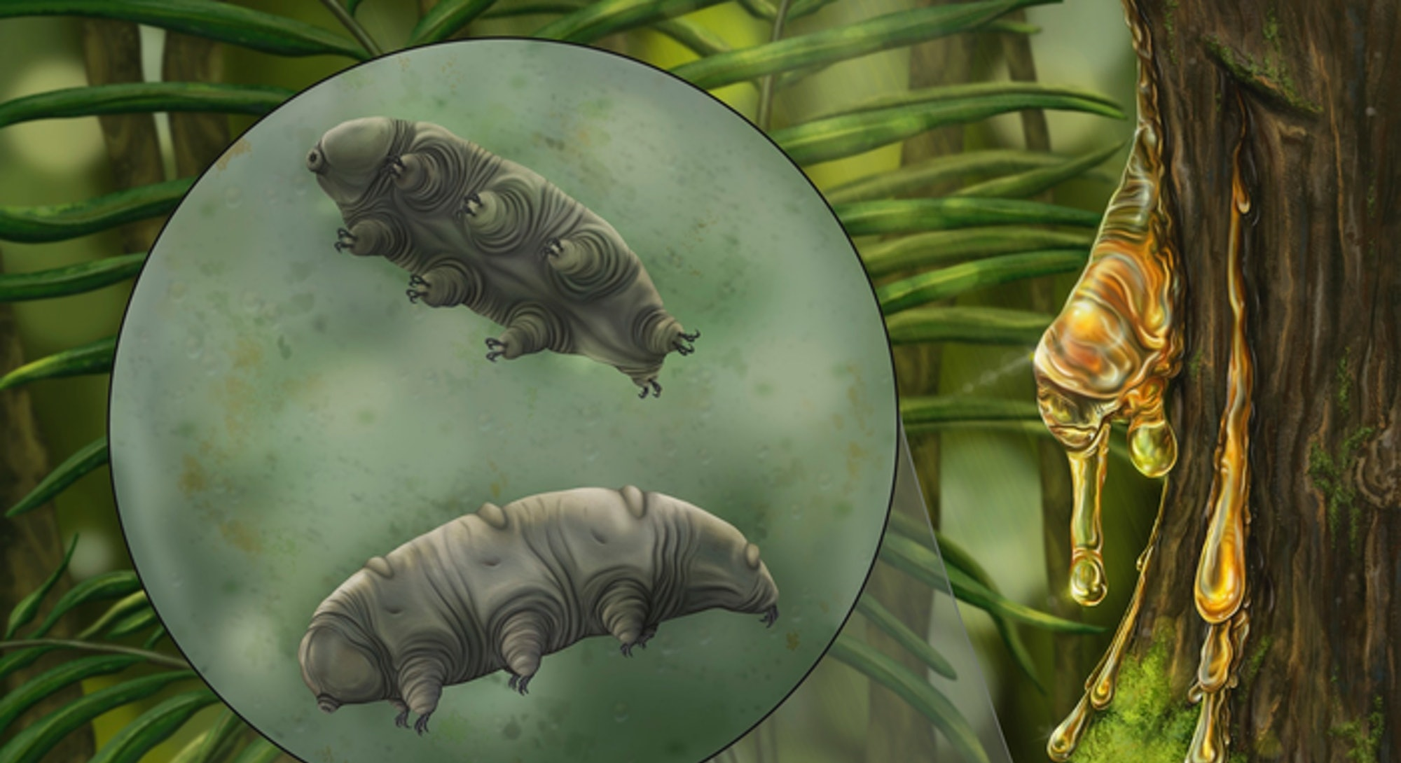 An artistic depiction of tardigrades