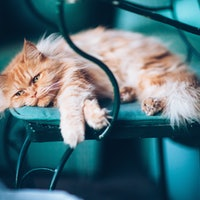How long can I leave my cat alone? Cat experts reveal a surprising answer