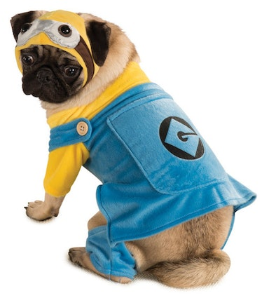 The Halloween Express 2021 pet costumes includes a Minion dog costume.