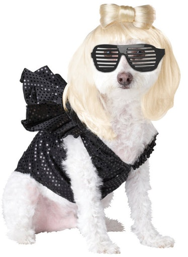 Halloween Express has a Lady Gaga pet costume as part of their 2021 pet costumes.