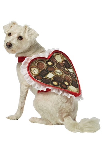 Chocolate Box Pet Costume