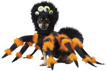This spider costume is part of the Halloween Express 2021 pet costumes collection.