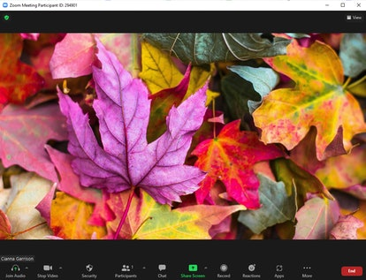 These fall Zoom backgrounds include beautiful red and orange leaves.