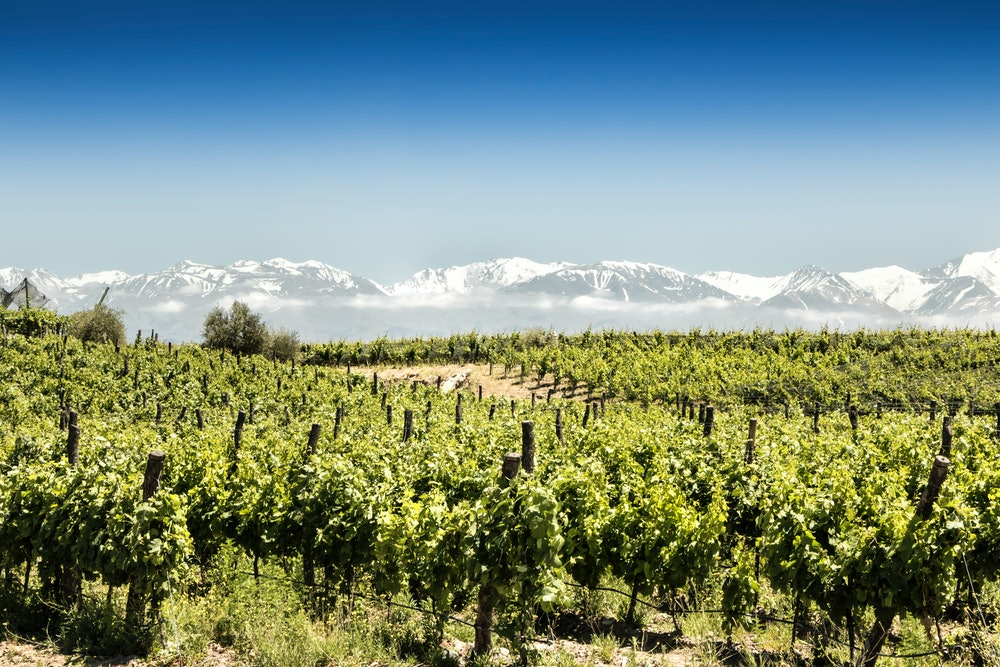 mendoza argentina vineyards with blue sky and snowy mountains