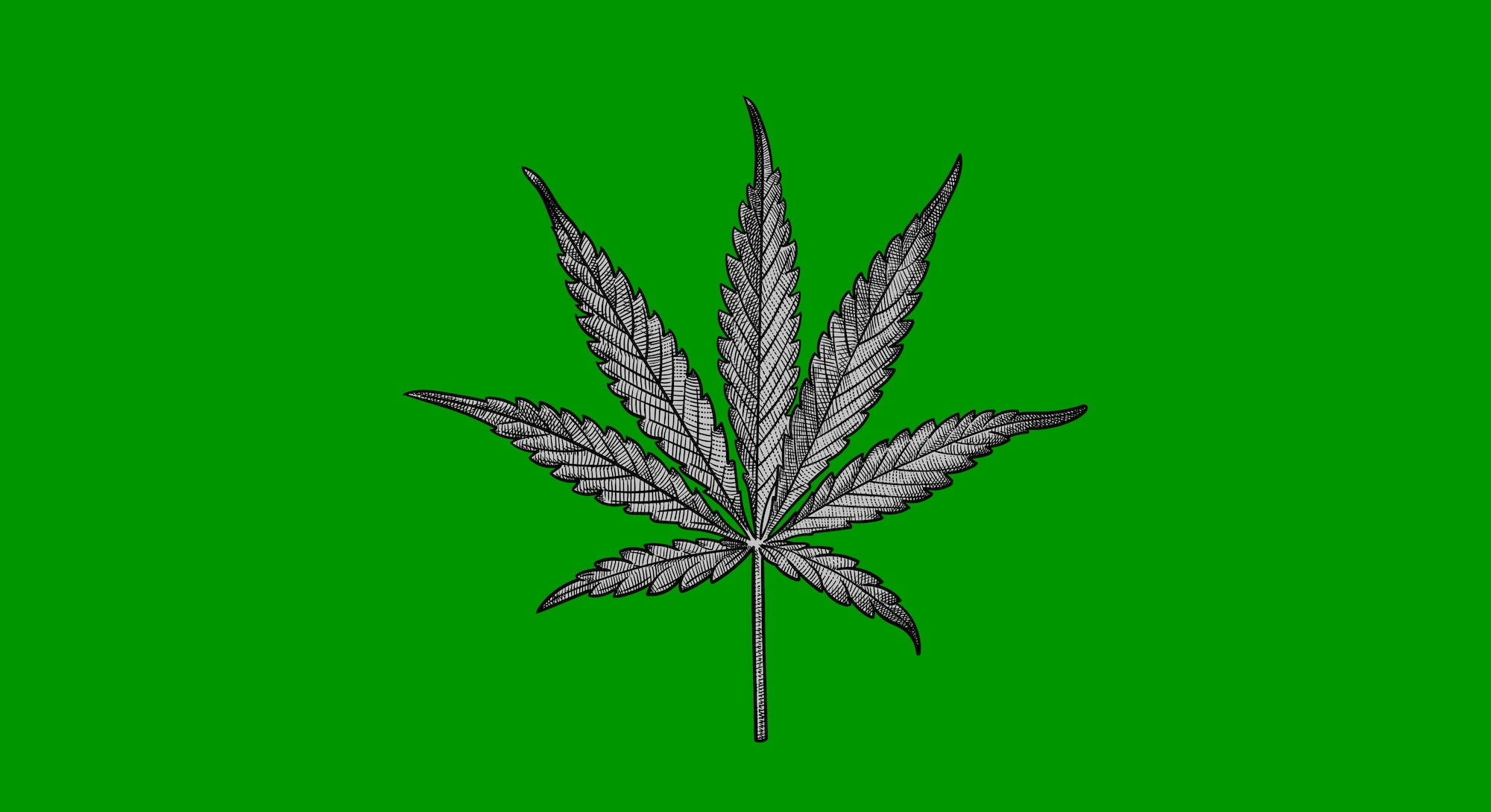sketch of a marijuana leaf on a green backgroun