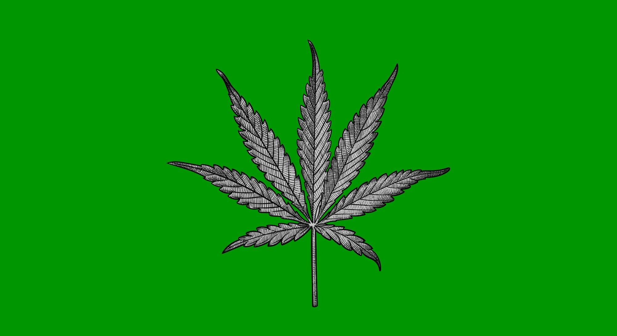 sketch of a marijuana leaf on a green backgroun