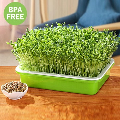 LeJoy Garden Seed Sprouter Tray