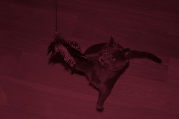 Cat playing with a toy on string to reduce hunting