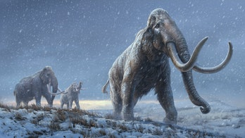 mammoth art woolly