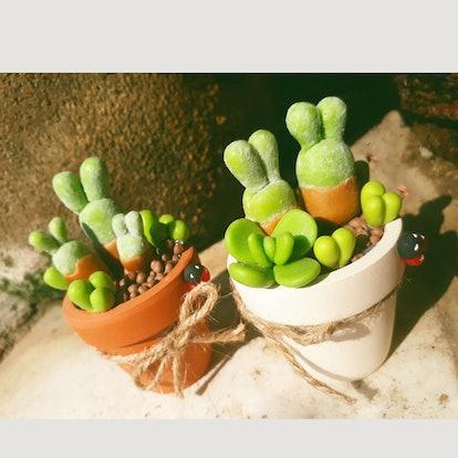 Set of 2 Rabbit Succulents Monilaria Moniliforme Planter