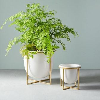Eden Cross Base Tabletop Planters - White