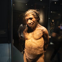 Neanderthal DNA may influence your Covid-19 risk — here's why