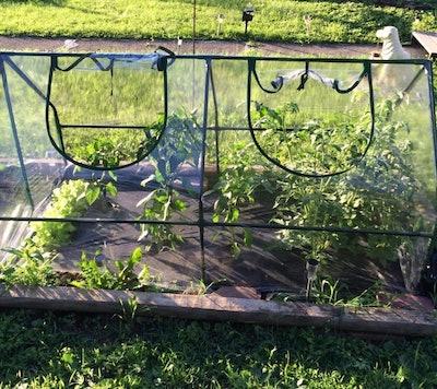Quictent Mini Cloche Greenhouse